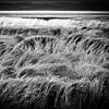 Angry Grass