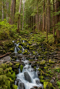 Stream at Sol Duc Falls Trail