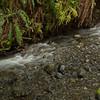Along the Creek, Beneath the Ferns