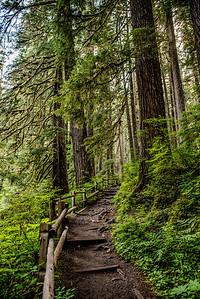 Trail to Sol Duc Falls