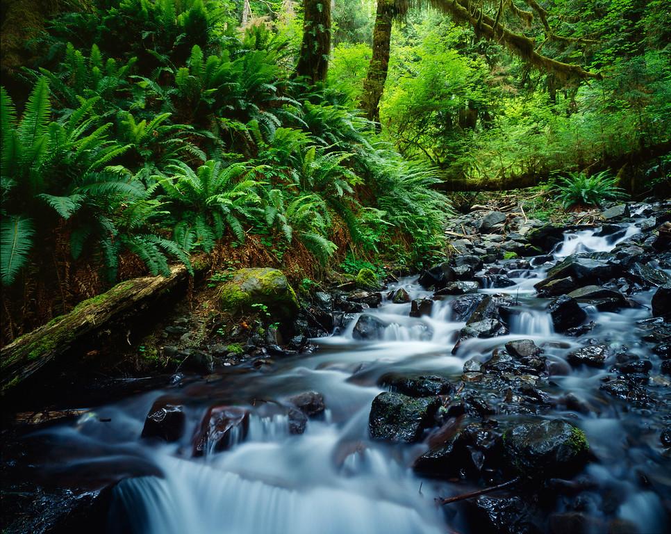 Hoh Rain Forest, Washington