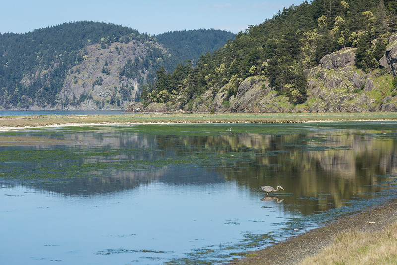 Lopez Island Heron Reflection