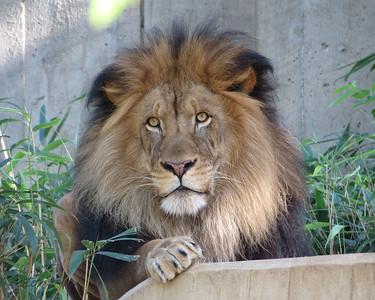 Washington, DC Day4 National Zoo 101312