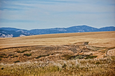 washington-wheat-field-2