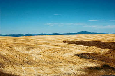 washington-wheat-field-3