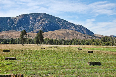washington-hay-field