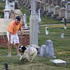 Congressional Cemetery is a dog park.