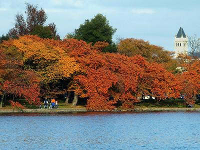 Strolling beneath the autumn leaves, Tidal Basin, Washington, DC. Lincoln Memorial