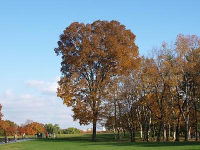 Oak tree in Autumn, Vietnam War Memorial, Washington, DC. Lincoln Memorial