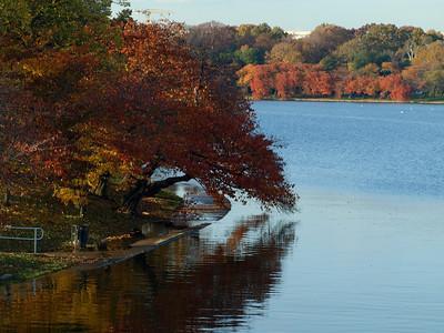 Fall leaves near and far, Tidal Basin, Washington, DC. Lincoln Memorial