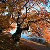 Cherry trees in fall colors, Tidal Basin, Washington, DC. Lincoln Memorial