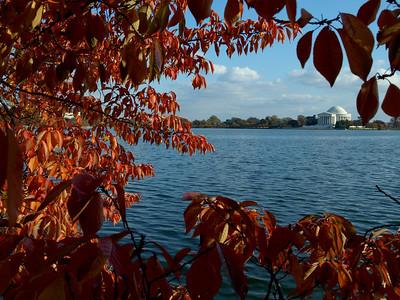 Jefferson Memorial and cherry tree, Tidal Basin, Washington, DC. Lincoln Memorial