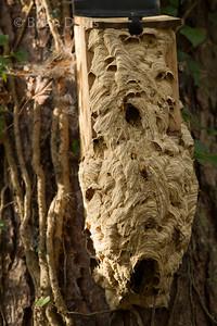 Hornet Nest (Hive)