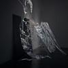 """Common Loon"" (oil on plexiglass)by Abigail Spector"
