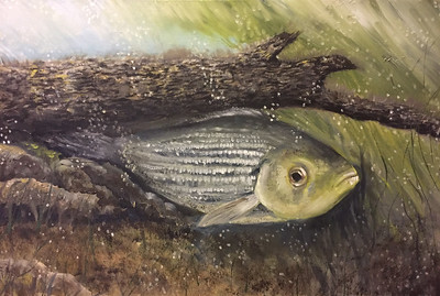 """Striper"" (oil on board) by Crista Bromley"