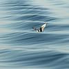 """""""Waves"""" (photography) by Aleksandr Laptev"""