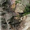 """Glen Falls"" (digitally manipulated photograph) by Dave Martsolf"