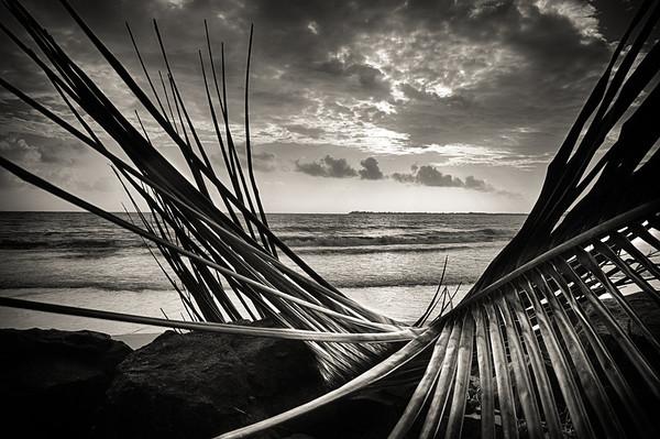 Ocean Through the Palm
