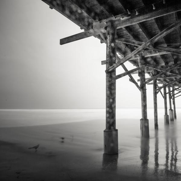 Birds under the Pier