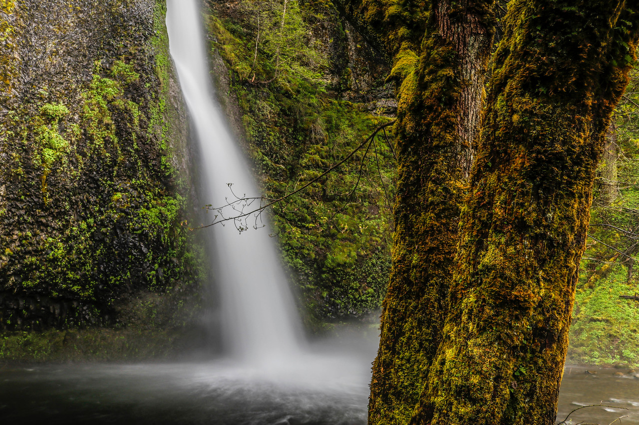 Love the Foreground here. Horsetail Falls