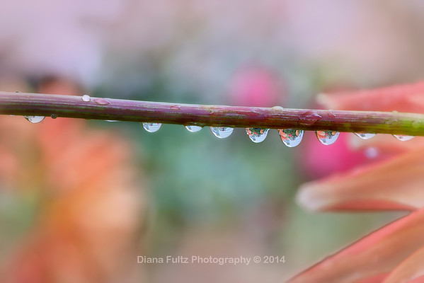 Water Drops/ Rain/Dew Drops