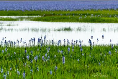 Camas Prairie Refuge