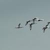 curlew squadron