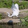 Egret away