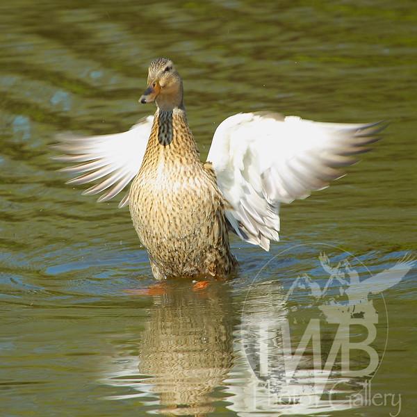 wing-man