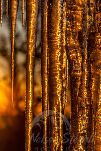 Icicles at Sunrise