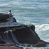 012514-SunsetCliff-060