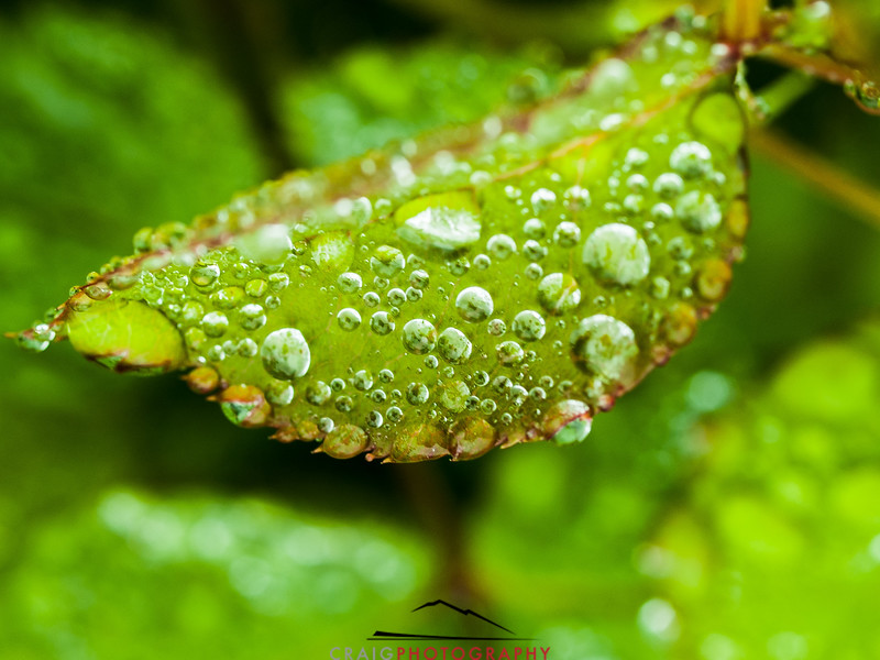 Water drops and leaves 3
