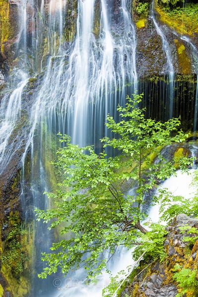 IMAGE: http://gkphotography.smugmug.com/Landscapes/WaterfallsWater-Features/i-DP67hVK/1/L/MG3556-L.jpg