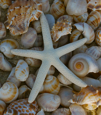 Sea Star and Shells
