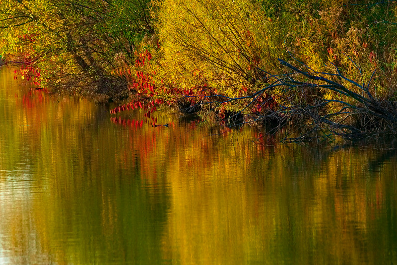 Autumn Pond Reflections