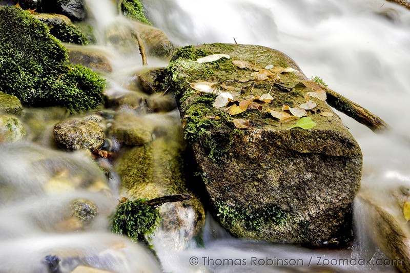Leaves perch on a rock that looks like an altar in a waterfall along the Little Spokane River.