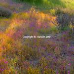 High Desert Spring 2, @ R  Hansen 2015