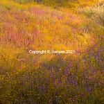 High Desert Spring # 1, @R Hansen 2015