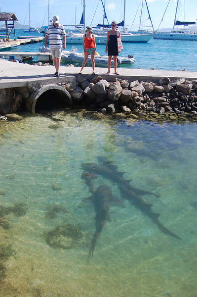 Later that afternoon we take the dinghy into Clifton.  The Anchorage Yacht Club has a pool out front full of nurse sharks.