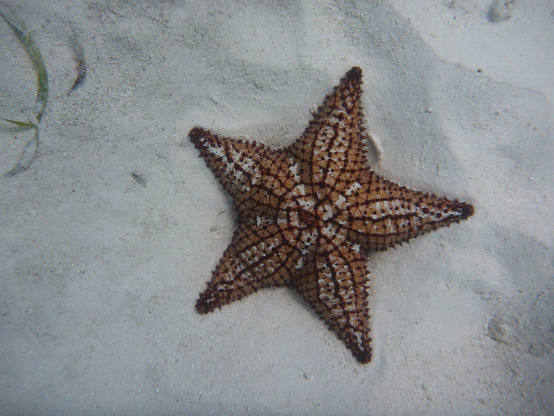 Starfish and not much else.