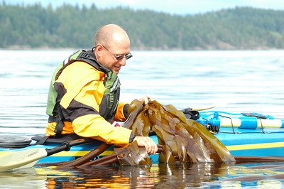 Jeff pulls up a bull kelp salad while trying to catch a kelp crab.