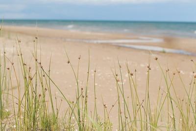 Shoreline plant habitat