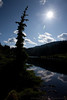 Upper Lena Tree Silhouette