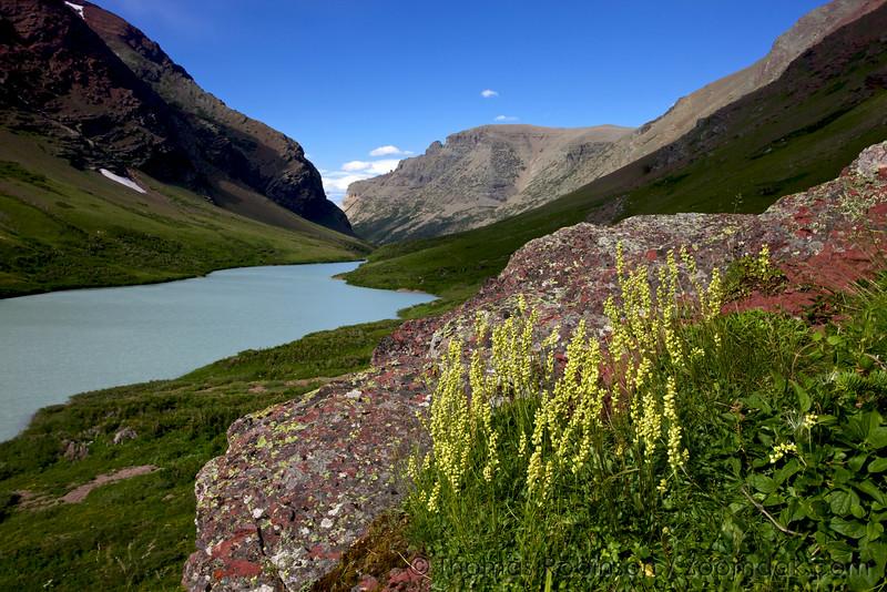 Yellow Penstemon and Cracker Lake