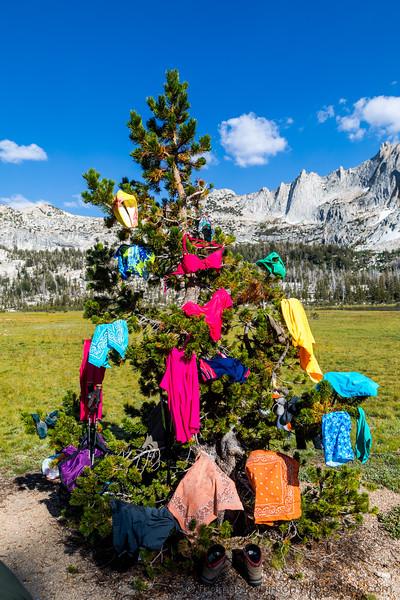 Backcountry Christmas Tree