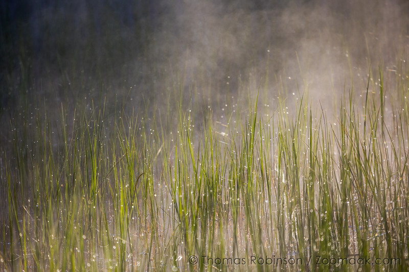 Mist and Dew