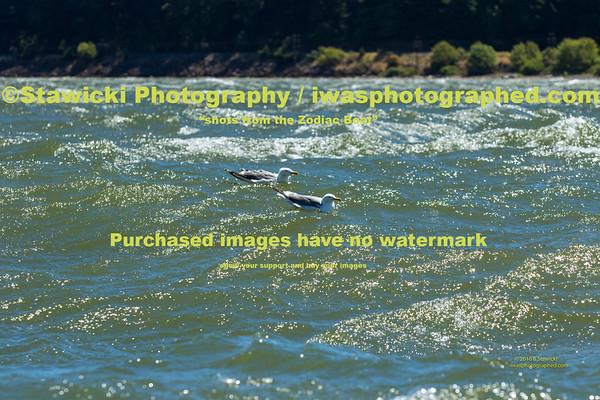 Wells Island 2016 07 15-8569