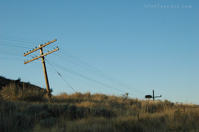 Some of the telephone poles are on a bit of a slant, and the osprey's have built themselves a little nest.