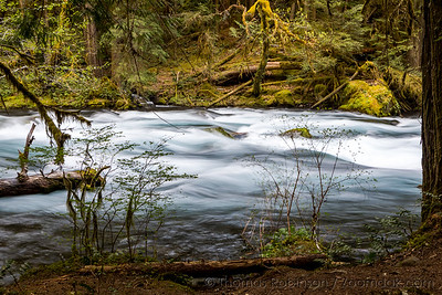 Spring on the McKenzie River