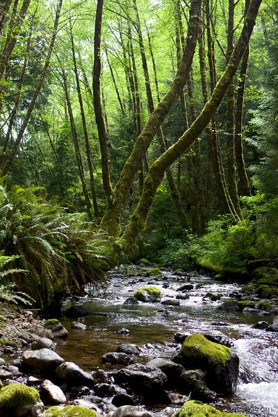 Quintessential Forest, Oregon